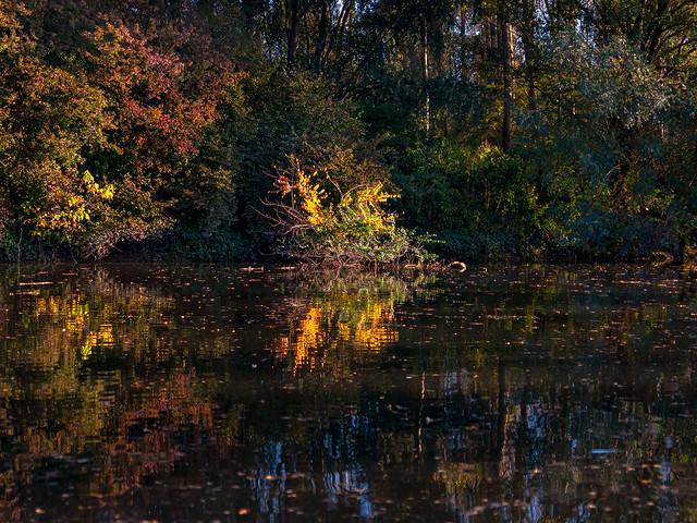 Autumn everywhere   SONY ⍺7RII & Sigma FE 1.4/50 Art