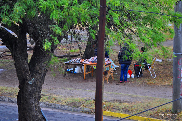 Pescados bajo el árbol