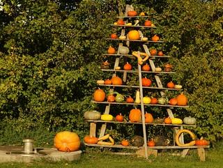 Kürbisbaum am Kurpfalzhof