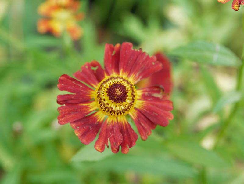 Journée des plantes Aiguebelette 48899690286_86929f1068_c