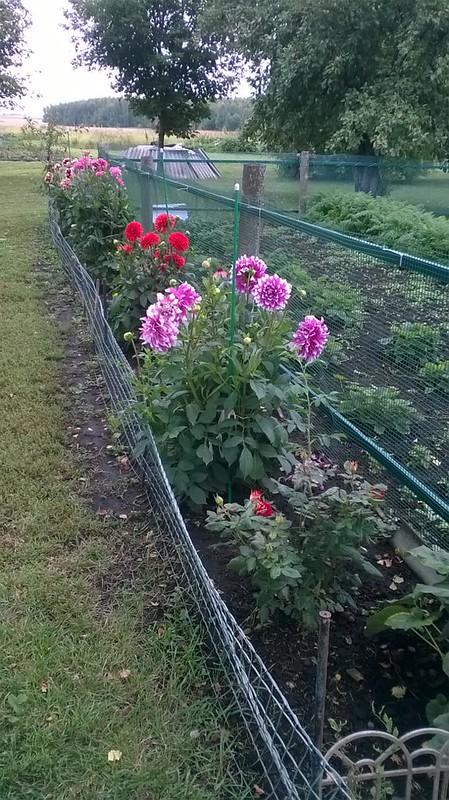 В саду у Маркиных
