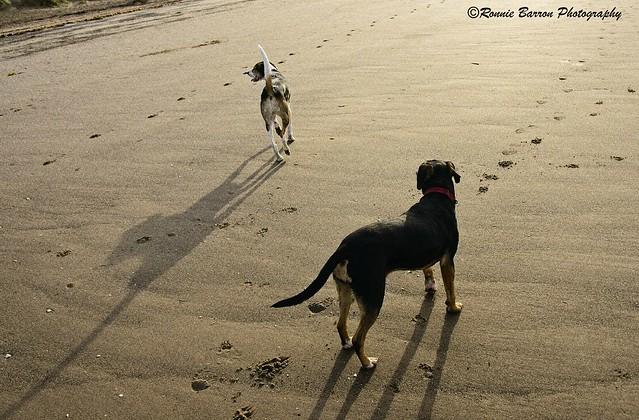 tall dogs - long shadows