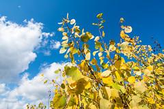 Fall in Gravenhurst