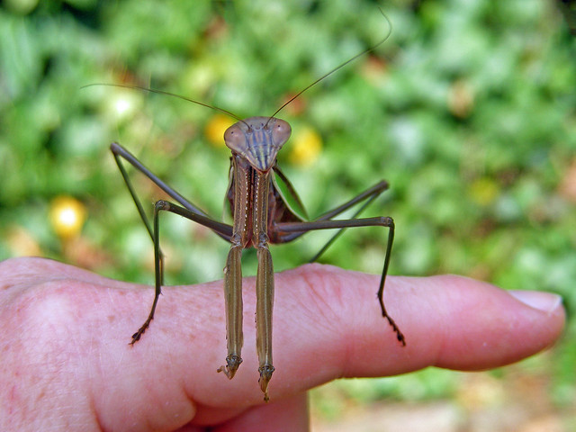 My Garden Visitor