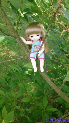 Les dolls de Harikanu : Fairyland, Cocoriang, etc. 48900043342_c456e43d4c_w