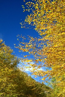 NC215 Fall Colors