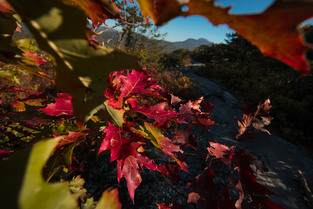 Flat Rock Overlook, Grandfather Mountain Framed