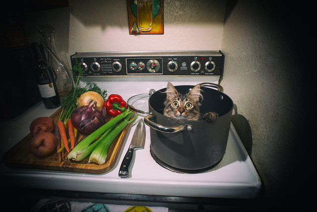 Day 14: Kitten Stew