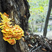 Rock Creek Park Fungi