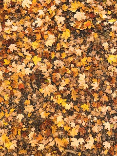 Fall's carpet