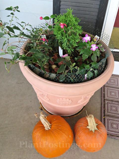 pots n pumpkins