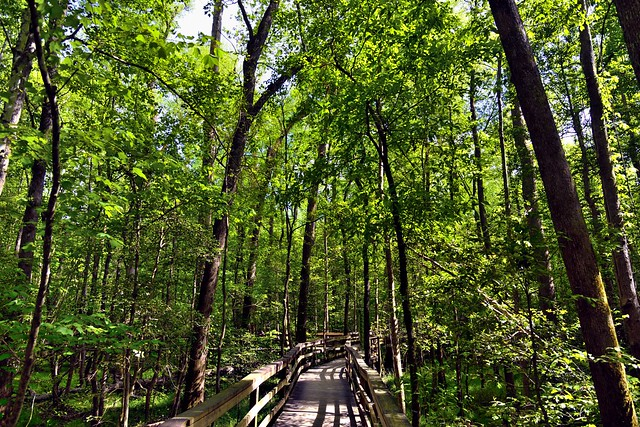Taking a Journey in Congaree National Park