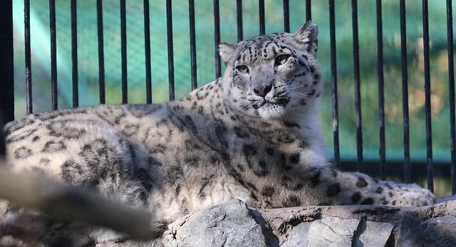 Narina-Novosibirsk Zoo