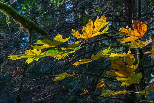 Autumn's light catchers.