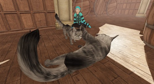 Donna vs Atlas - kitty play time