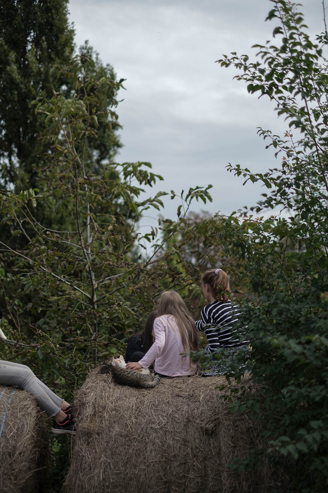 Experience therapy for teenage girls in foster care in Márokföld, Hungary