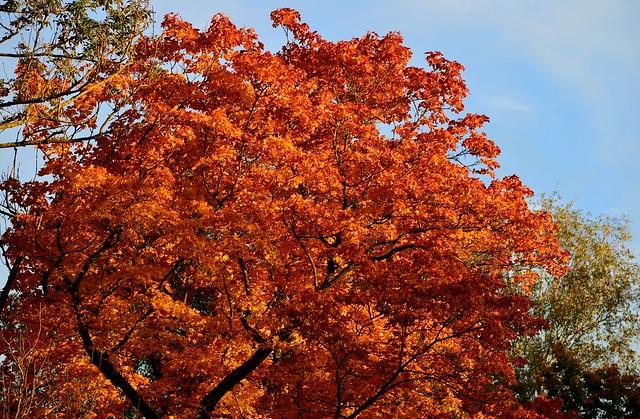 Munich - Fall Foliage
