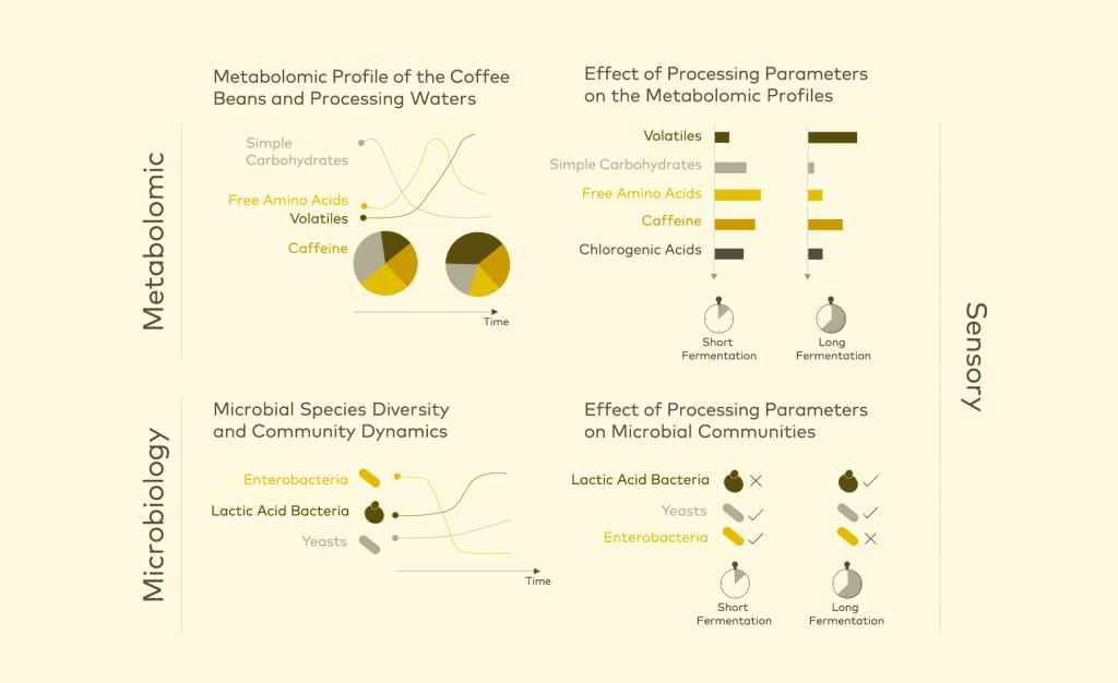 Tác động của vi sinh vật đối với quá trình lên men cà phê (1)