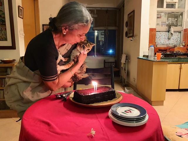 City Obituary - Sufi the Cat, Mehrauli