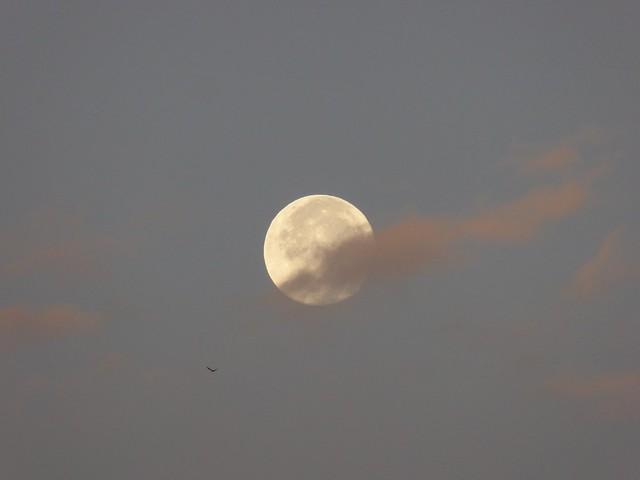 Luna piena all'alba.