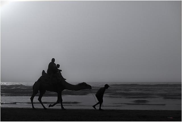 Camel Walk, Sidi Ifni (Marroc)