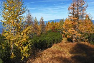 Golden October on Peca / Petzen
