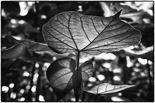 Plant in Black & White