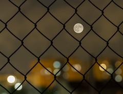 Enjaulado a la luz de la luna...