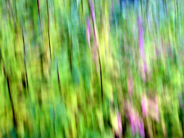 Intentional Camera Movement 2