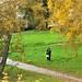 В Костроме обсудят будущее оврага у филармонии