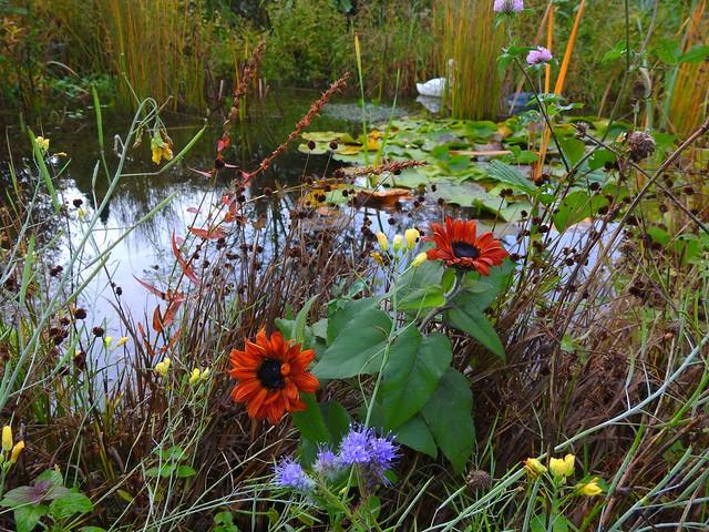 Autumn capture - Herbststimmung im Garten