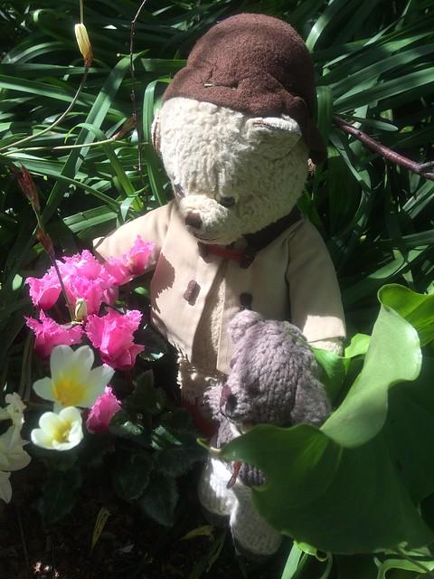 Paddington, Scout and the Cyclamen