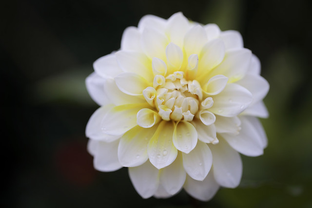Big n bold bloom