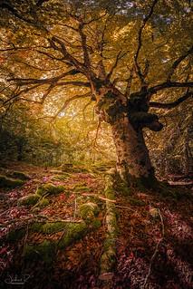 Entzia Forest, Euskadi