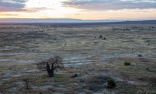 Sundowners in Randilen WMA - Tarangire National Park