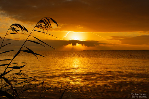 golden glorious sunrise waterland markermeer netherlands water lake landscape waterscape nikon d7500 reed outdoor nature monochrome gorgeous elitegalleryaoi bestcapturesaoi aoi