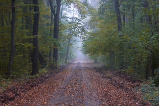 În adâncul pădurii