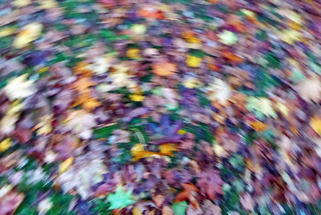 ICM - Autumn Leaves