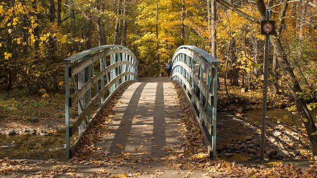 Automne, autumn - Parc de l'escarpement - Québec, Canada - 4829