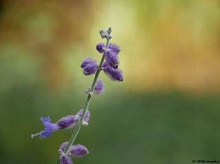 Unbekannte Blüte.