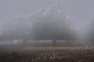 Wild im Nebel / Wildlife in the fog