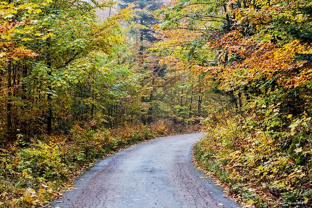 Jesen u šumi (2)