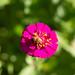 "<p><a href=""https://www.flickr.com/people/184988168@N05/"">anntheadventurist</a> posted a photo:</p>  <p><a href=""https://www.flickr.com/photos/184988168@N05/48903483932/"" title=""Magenta-flower""><img src=""https://live.staticflickr.com/65535/48903483932_7a6a6ca7b1_m.jpg"" width=""187"" height=""240"" alt=""Magenta-flower"" /></a></p>"