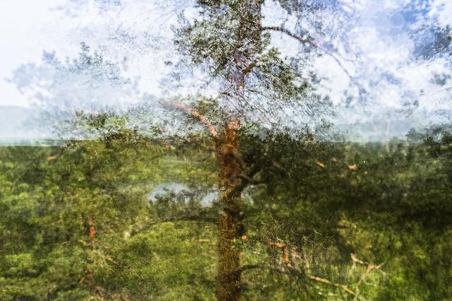 puu, tree, wood
