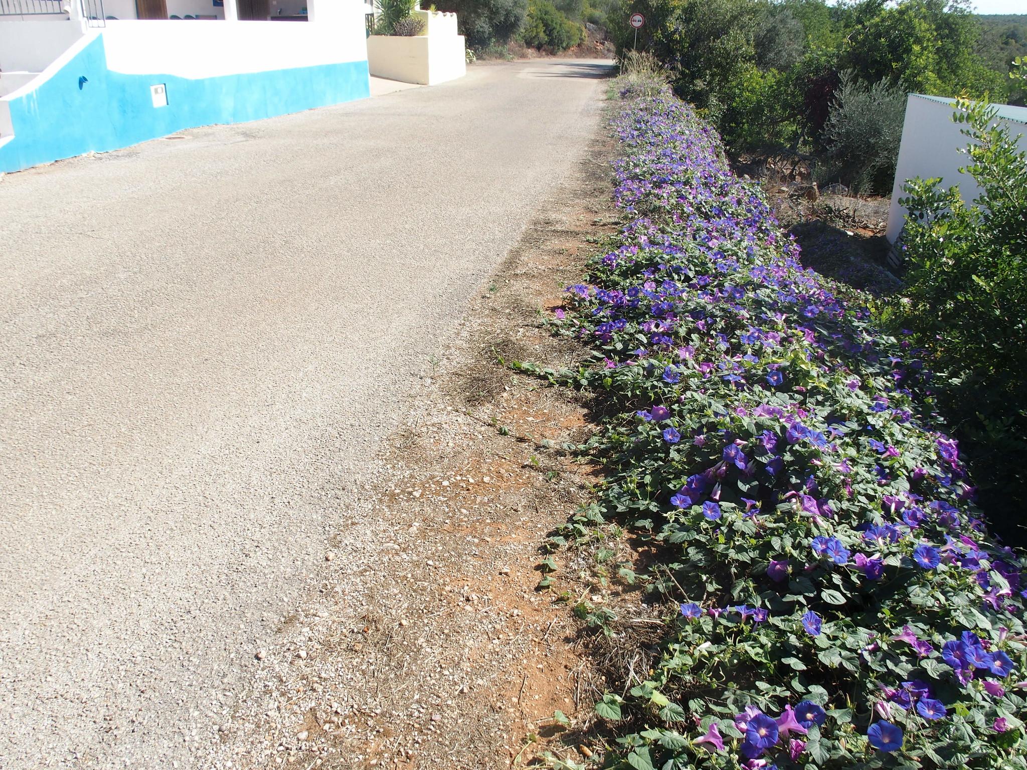 A13 Blommorna för dagen