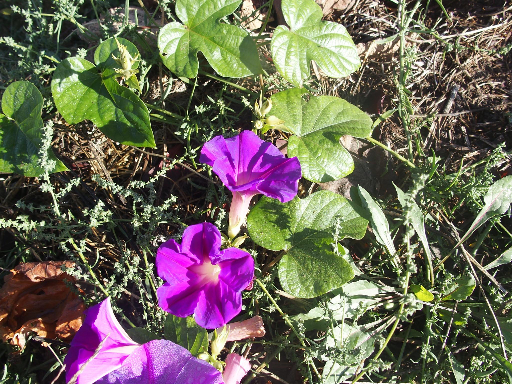 A3 Blomman för dagen