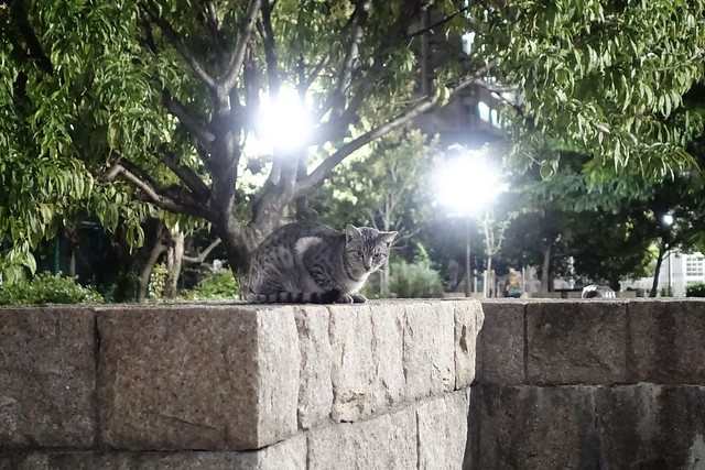 Today's Cat@2019-10-15