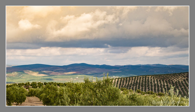 Nubes sobre el mar de olivos //Clouds over the sea of olive trees