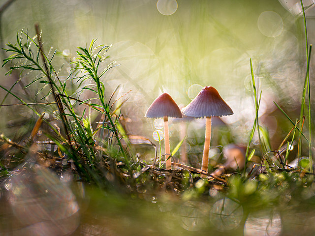 Shroom magic | SONY ⍺7RII & Sigma FE 1.8/135 Art