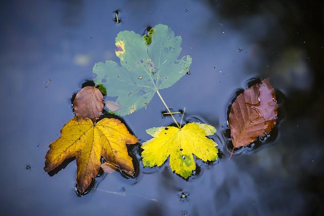 S'écoule l'automne